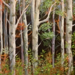 A Stand of Birch (8 x 10 oil)
